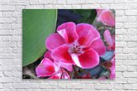 Flower (2)  Acrylic Print