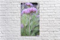 Flower (43)  Acrylic Print