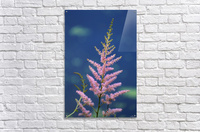 Pink Floral Dow Gardens 2 062718  Acrylic Print