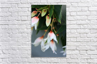 Soft Floral with Gray Wall 2 062618  Acrylic Print
