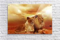 lion safari africa landscape  Acrylic Print