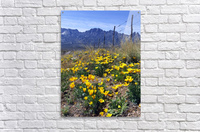 April at Aquirre Springs  Acrylic Print