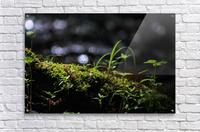 Beautiful Moss  Acrylic Print