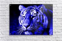 Tiger pop blue  Acrylic Print
