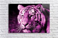 Tiger pop pink  Acrylic Print
