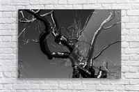 Metal tree  Acrylic Print