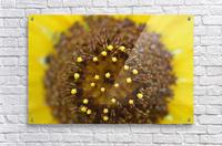 Sunflower Stars  Acrylic Print