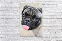 Pug Joker  Acrylic Print