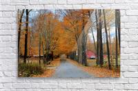 Autumn Three Maple Dr. Manchester VT  Acrylic Print