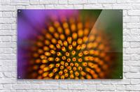 Flower Abstract  Acrylic Print