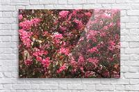 Flowering Tree  Acrylic Print