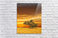FireGold  Acrylic Print