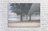 Soft Snow Fall Photograph  Acrylic Print