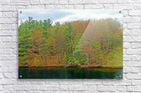 Lively Trees  Acrylic Print