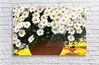 White Flowers In Hanging Pot White Flowers Canvas Print White Flowers Photograph 889  Acrylic Print