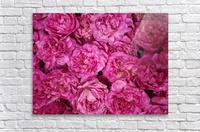 ROSE GARDEN    Acrylic Print