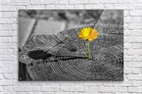 Life Persists  Acrylic Print