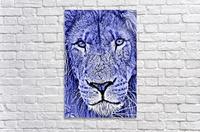 Male Lion Face thula art 5  Acrylic Print