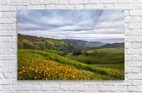 California is home  Acrylic Print