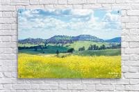 Custer State Park Yellow  Acrylic Print