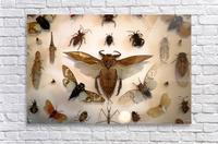 Biodiversity  Acrylic Print