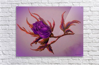 Decorative Wild Rose  Acrylic Print