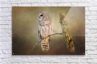 Whos There  Acrylic Print