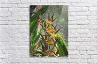 Hawaiian Orchids Color Pencil   Acrylic Print