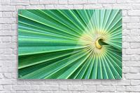 Spreading the Green  Acrylic Print