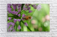 Bees & Flowers Photography  Acrylic Print