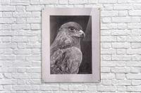 Falcon_DKS  Acrylic Print