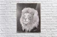 Lion_DKS  Acrylic Print