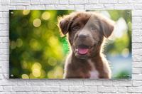 esa dog  Acrylic Print