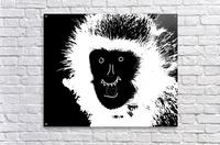 MOMO by dePace  Acrylic Print