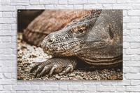 The Komodo Dragon   Acrylic Print
