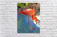 Living in Paradise  Acrylic Print