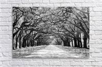 Wormsloe Plantation   Savannah 04420  Acrylic Print