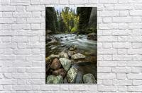 Rocky Mountain Stream II  Acrylic Print