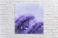 Purple Snowflakes  Acrylic Print