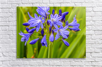 Close up of purple flowers  Acrylic Print