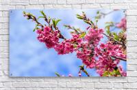 Tree XIII - Cherry tree  Acrylic Print