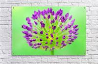 Neon Allium  Acrylic Print