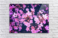 blooming pink flowers garden texture background  Acrylic Print