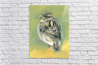 Sunny Sparrow  Acrylic Print