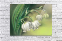 Lily of the Valley Flowers  Acrylic Print