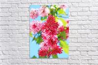 Sweet Side Of Red I  Acrylic Print