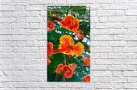 Orange gumamela  Acrylic Print