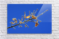 Sucreries glacees  Acrylic Print