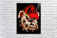 1966 Georgia Bulldog  Acrylic Print