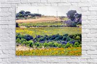 Sunflower Landscape  Acrylic Print